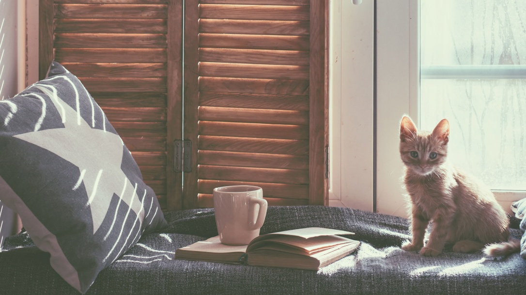 Cats_Kittens_Glance_Window_Cup_Book_527324_3840x2160