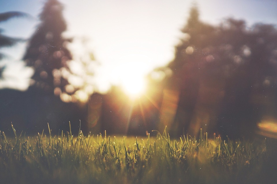 grass-455753_960_720