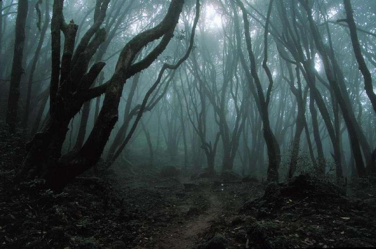foreste-piu-paurose-del-mondo
